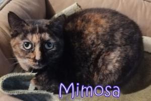 Ciao. Io sono Mimosa e sono bellissima. Vivevo con Susy in un giardino nel quale non eravamo ben accette. Le persone mi spaventano ancora, ma sono molto curiosa, mi piace osservarvi a distanza....