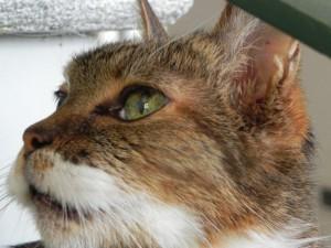 Otis adottato all'età di 17 anni