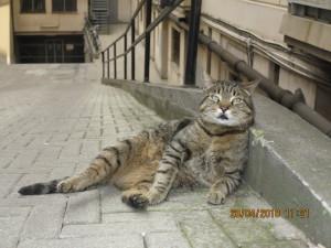 SMARRITO  a Torino in località San Salvario, Via Principe Tommaso, all'altezza del n.ro 1. Si Chiama Ernesto, è un gatto di colonia con l'orecchio tagliato, per cui sterilizzato, di colore grigio, occhi verdi. Dal 28 di gennaio ha cominciato a non frequentare più il suo posto abituale, forse perché spaventato, ma l'ultimo avvistamento risale all'otto di marzo. Lo cerchiamo disperatamente, aiutaci anche tu. Se lo avessi visto questi sono i contatti:  Alessandra 3206207191 / Daniela 3494120117 / Gianni 3405599148