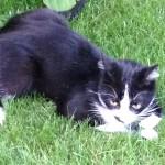 Abbiamo smarrito un gattino a Torino in zona Sassi, in strada comunale del Cartman, vicino al traforo del Pino. Si chiama Alberto. Il mio numero é il seguente 3494368733 vi chiedo aiuto per ritrovarlo Grazie a tutti