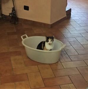 Dal 31 ottobre la mia  gattina Minù non torna a casa. Ha 2 anni, non è molto grande come stazza e ha una  cicatrice sul nasino. Abitiamo a Valfenera, se qualcuno  l'avesse trovata o la vede in giro il recapito è 3490667196.  Grazie