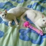 Lola e Fiocco di Arianna Letizia e Viviana