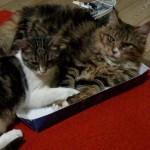Matisse e Tigro di Barbara