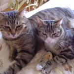 Romeo e Tigre di Roberta
