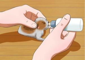 gatto allatato
