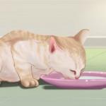 gatto svezzamento