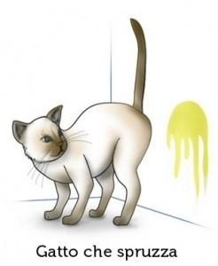 gatto-che-marca