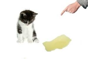 gatto-con-pipi